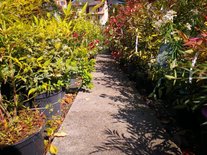 parc plante cholat