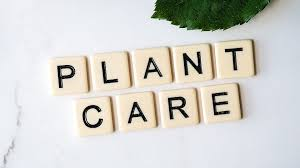 Soins aux plantes